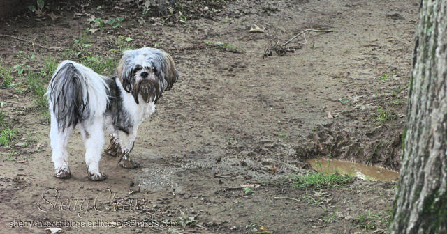 The Mud Puddle